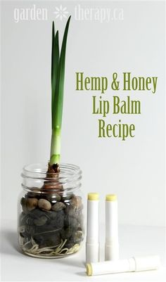 Hemp and Honey Lip Balm Recipe (contains manuka honey and said to help prevent cold sore virus)
