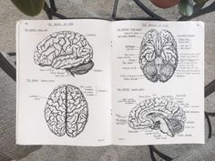 "cancerbiophd: ""an anatomy book from the my mom used during nursing school. Medicine Notes, Psychology Student, Psychology Notes, School Study Tips, School Notes, Med School, Student Motivation, Study Hard, Student Studying"
