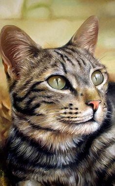 Olhar de um gato - Pintura à óleo sobre tela - Fabiano Millani