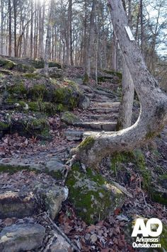 Hiking Trails in Arkansas - this one lead to Indian Rockhouse Cave