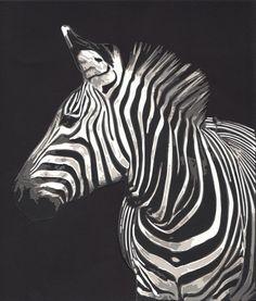 Zebra, 2013. Paper. 11 in x 11 in.