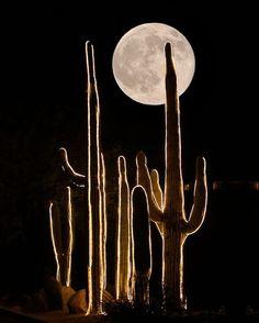 -Cactus Moon   Photo share moments