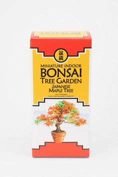 Urban Outfitters - Miniature Indoor Bonsai Tree