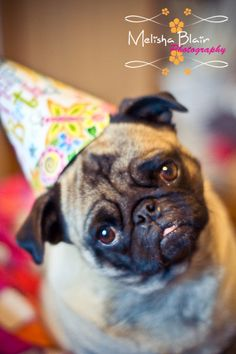 My Funny Birthday Pug Lola