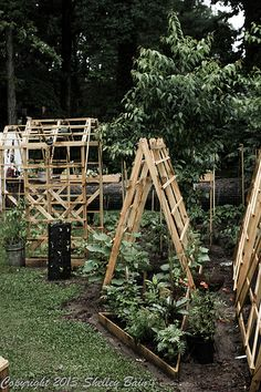 Our garden - butterfly/bee bed, cucumbers on trellis, tomatoes, green beans on trellis in background