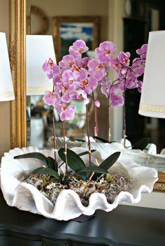 Orquideas orqu deas pinterest decoraci n de for Decoracion hogar granada