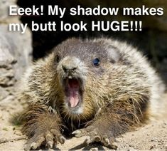 A Little Dose of Happy with Cute and Funny Groundhog Memes #groundhogday #funny #animalmemes