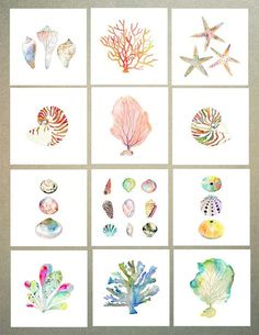 Sea Shell Collection Watercolor Print. Beach by SnoogsAndWilde