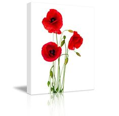 red poppy flower isolated on a white background. close-up of beautiful blooming poppies with buds and leaves. bunch of flowers spring bouquet over white backdrop Canvas Art, Canvas Prints, Art Prints, Canvas Size, Poppy Images, Poppies Tattoo, Red Poppies, Poppy Flowers, Yellow Roses
