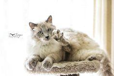 Moortje & Raggedy Andy | Lethbridge Pet Photography - Fun ...