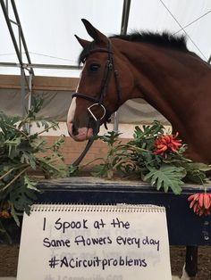 Horse Shaming, april clay, horse rider psychology, equine psychology, horse psychology