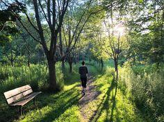 Evening trail walk in Prince Edward County