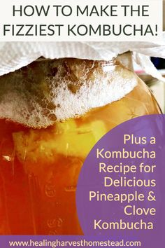 Find out how to make your homemade kombucha super fizzy and delicious every time! This healthy and natural soda substitute is full of probiotics, and can be is flat. This article explains how to get that soda pop feeling in your healthy drink. Party in your mouth! #kombucha #howtomake #fizzy #naturalsoda #substitute #healthy #drink #carbonate #healingharvesthomestead Kombucha Fermentation, Jun Kombucha, How To Brew Kombucha, Kombucha Recipe, Fermentation Recipes, Kombucha Brewing, Healthy Juices, Healthy Drinks, Paleo Recipes