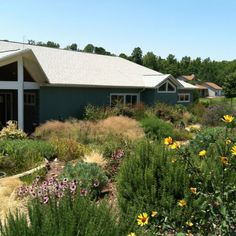 Instead of grass- front yard with low maintenance, low water and no chemicals.