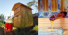the Flow Hive! Honey on Tap: A New Beehive that Automatically Extracts Honey without Disturbing Bees
