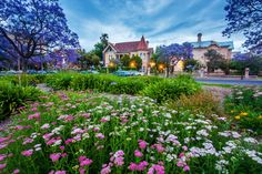 The Garden in Adelaide, South Australia jigsaw puzzle in Street View puzzles on TheJigsawPuzzles.com