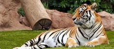 Find great deals on Kerala Wildlife Tour, Kerala wildlife holiday Packages. Get Free Quotes on Kerala Wildlife Tour Packages at reasonable price. Tourism India, Kerala Tourism, River Cruises In Europe, Kovalam, Tourism Industry, South America, Wildlife, Big Cats, Tigers