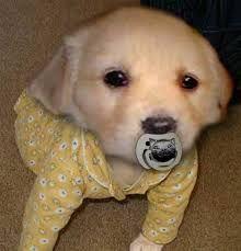 Znalezione obrazy dla zapytania cucciolo cane