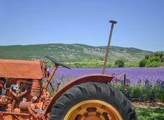 #agriculture #cc0 #farm #farming #france #free photo #free picture #luxe #public domain #purple #smell #south #souvenir #tourism #tractor #wheel #wheel motor