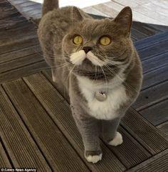 ダンディ過ぎ!あまりに紳士過ぎる「ネコ」がいると話題に 面白ニュース 秒刊SUNDAY