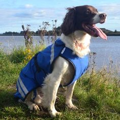 "New 16/"" 41cm Blue Waterproof Nylon Dog Coat Rain Mac Waterproof Lined Navy Check"