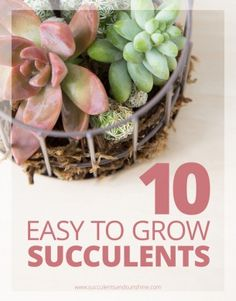Find out more about these 10 easy to grow succulents and add them to your collection!