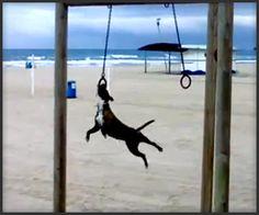 Gymnast Dog