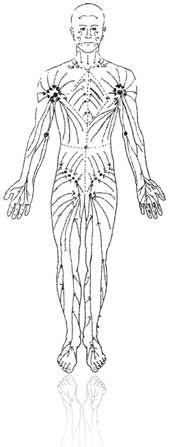 Shrinc Clinic | Cellulite Reduction & Treatments | Velashape | Body Fat Reduction | Liposuction Melbourne