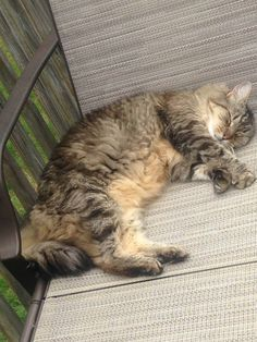 Peggy GauthierLedyard Animal Control 5 hrs ·    This is Spooky, she is a Maine Coon cat approximately 12 lbs. Missing from Rose Hill Road since around Friday. If anyone has seen her, please call me at 860-215-0260 (Peggy). https://www.facebook.com/groups/826596090765624/permalink/845606232197943/