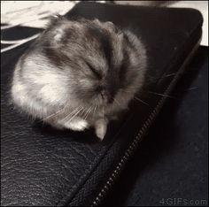 Falling asleep on the job.