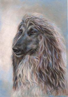 Image result for afghan dog zentangle