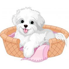 White Pup in Bed