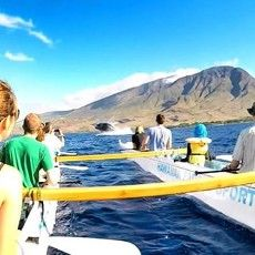 Maui Whale Watching | Kayak or Canoe | Whale Watch Tours