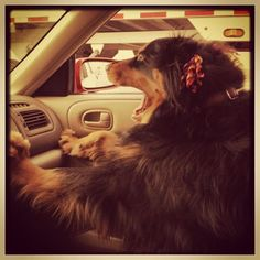 I love the way she's bracing herself with her feet on the dash like my Mom when she was teaching me to drive.