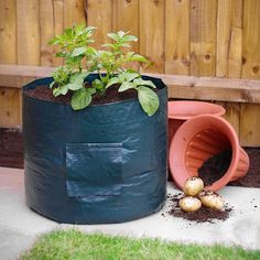 Potato Grow Bag | Poundland    a great idea for small gardens, and easy to move out of the way, or to keep by the kitchen door for amazingly fresh potatoes.