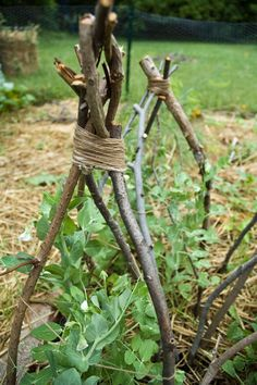How to make a pea teepee... i always wanted these in a garden.. but with flowers on it!