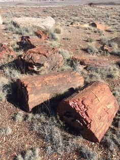 Petrified Wood in the Petrified Forest National Park, Arizona. Petrified Forest National Park, Best Campgrounds, Petrified Wood, Arizona, National Parks, Pictures, Photos, Grimm