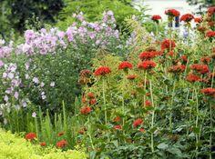 Unelmien perennapenkki: mummon kukat | Viherpiha