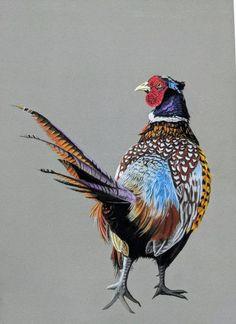 Pheasant – Framed Pheasant print – pheasant giclee – pheasant art – Pheasant Framed giclee print – My ideas, my pins 2020 Wildlife Art, Wildlife Paintings, Pastel Artwork, Painting Snow, Bird Pictures, Pheasant, Portrait Art, Bird Art, Beautiful Birds
