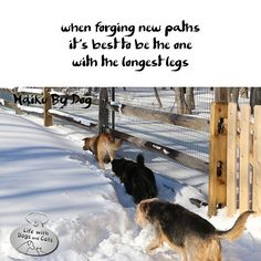 Haiku by Dog: when forging new paths / it's best to be the one / with the longest legs