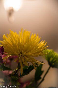 The Golden Flowers Under the Florescent Light.  by Jolly Sienda
