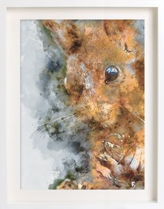 Squirrel, watercolour 5 of the Woodland Wonder Series, available as a limited edition print on Canson Infinity Aquarelle rag paper stock.