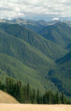 Washington State Forest