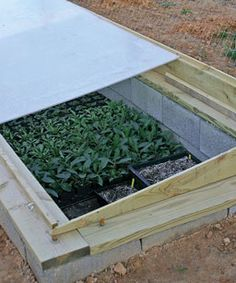 How to Use a Cold Frame