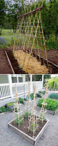 The Bamboo Garden: Best Gardening Tips And Ideas - Garden Ideas & Tips Bamboo Trellis, Bamboo Poles, Pea Trellis, Potager Garden, Garden Trellis, Diy Jardim, Organic Horticulture, Diy Garden Projects, Craft Projects