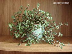 Plantas naturais no lavabo... - Jeito de Casa