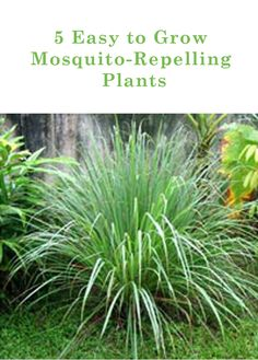 Use less bug spray and enhance your garden with these easy to grow plants!