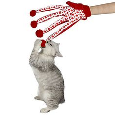 Toy Cat Pet Scratch Glove Activity Play Design Your Kitten Mitt Mouse Mice Trick