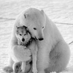 Appears the dog isn't as into it as much as the polar bear.