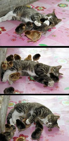 amistad-animal7